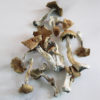 Golden Teacher Magic Mushrooms | CBD & Shrooms Canada