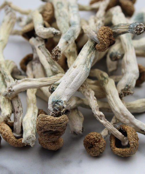 Avalanche Magic Mushrooms Canada | CBD & Shrooms