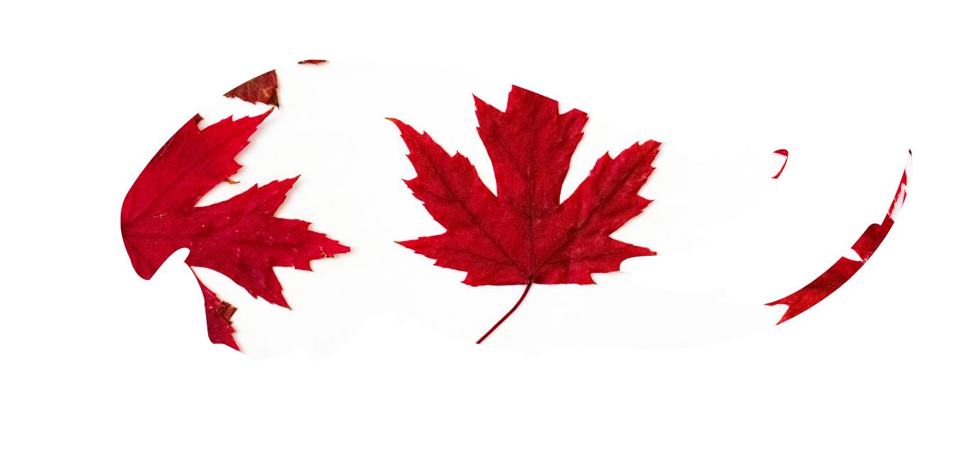 Buy Magic Mushrooms In Canada   CBD & Shrooms