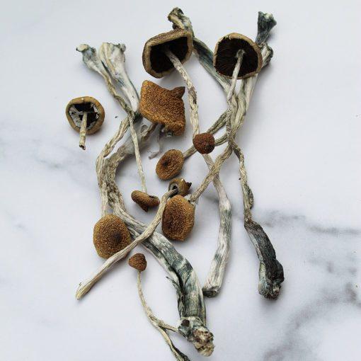 Costa Rican Magic Mushrooms | CBD & Shrooms Canada
