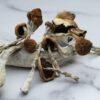 Daddy Long Legs Magic Mushrooms   CBD & Shrooms Canada