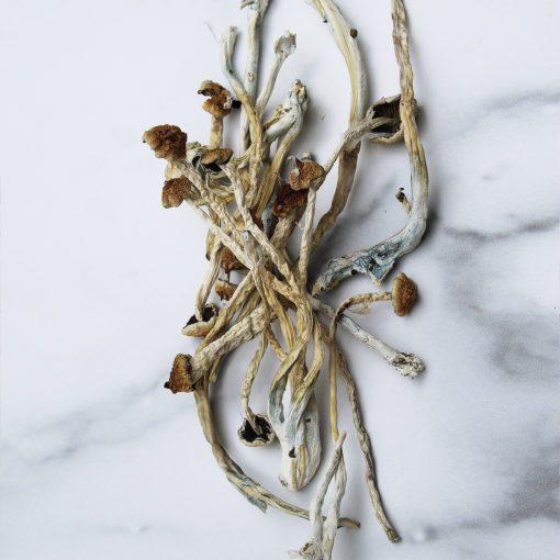 Goldie Locks Magic Mushrooms Canada   CBD & Shrooms