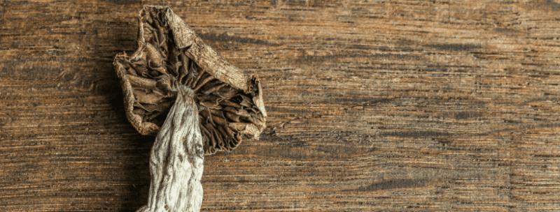 How Should You Take Magic Mushrooms