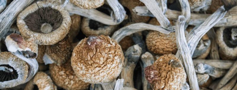 Where To Buy Magic Mushrooms 2